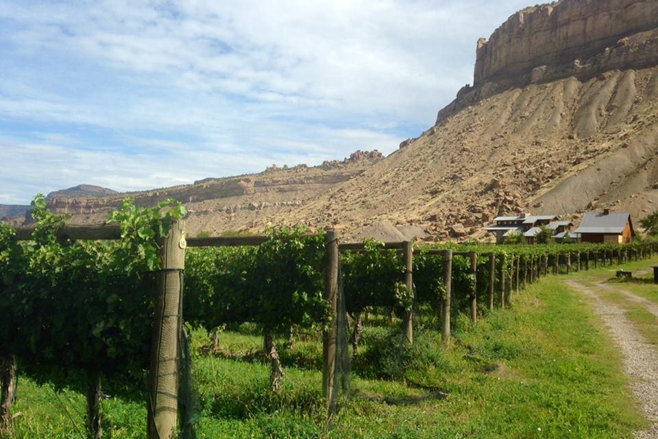 Bookcliff Vineyards Palisade Colorado