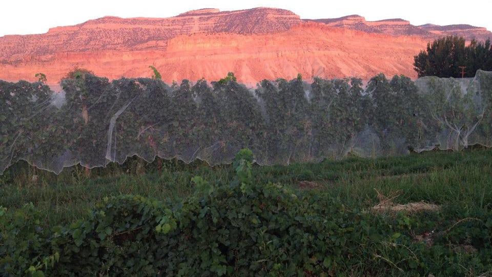 Bookcliff Vineyards Palisade Colorado Sunset