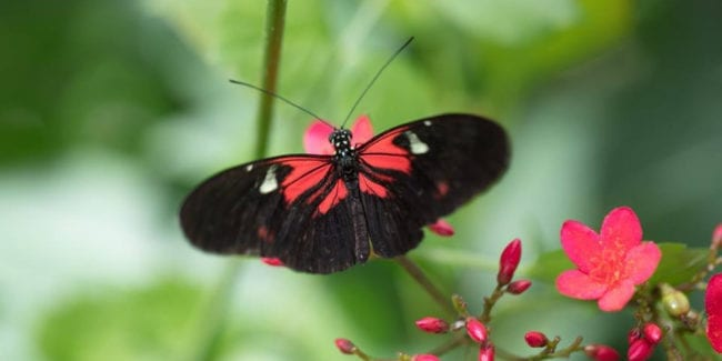 Butterfly Pavilion & Insect Center | Wildlife attraction ...