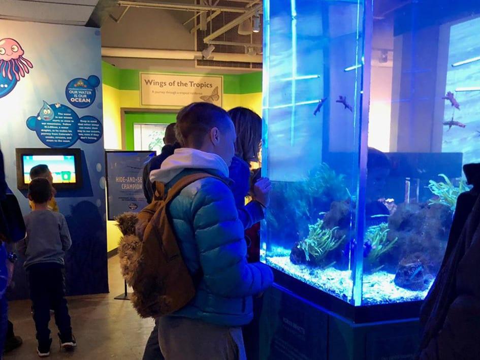 Butterfly Pavilion Aquarium Exhibit