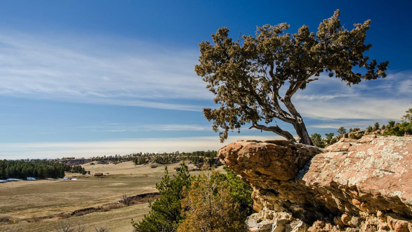 Castlewood Canyon State Park Tree Franktown Colorado