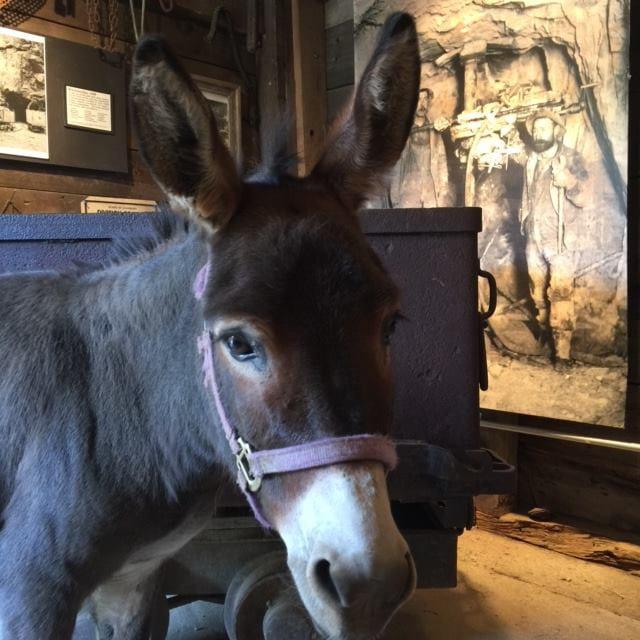 Country Boy Mine Breckenridge Donkey