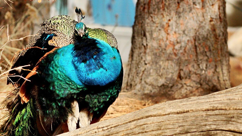 Denver Zoo Colorful Bird