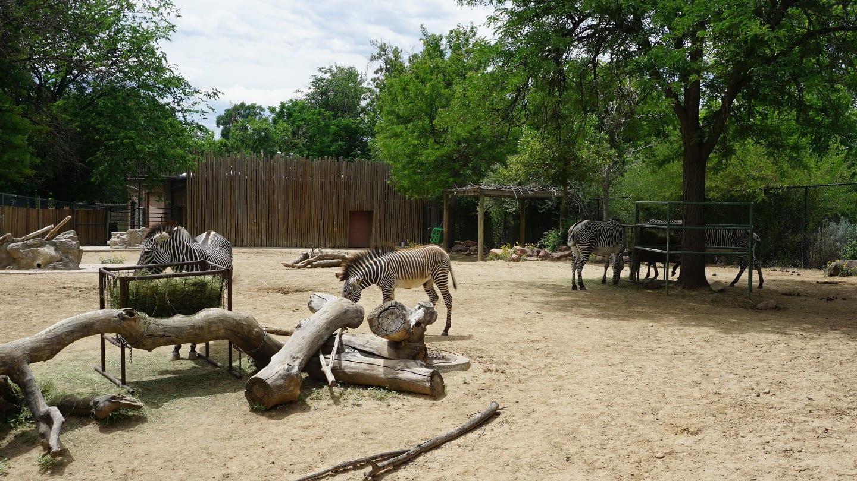 Denver Zoo Zeebra