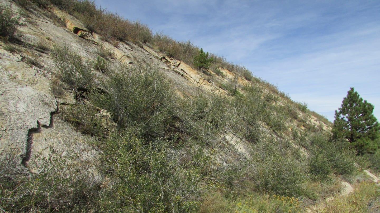 Dinosaur Ridge Cinquefoil Morrison Colorado