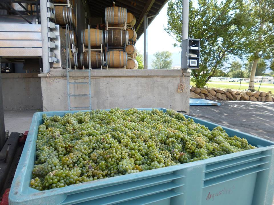 Grande River Vineyards Green Grapes