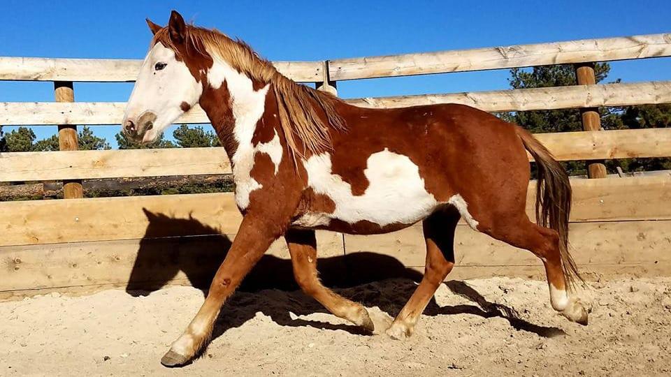 Great Escape Mustang Sanctuary Horse