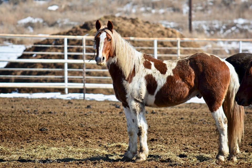 Great Escape Mustang Sanctuary