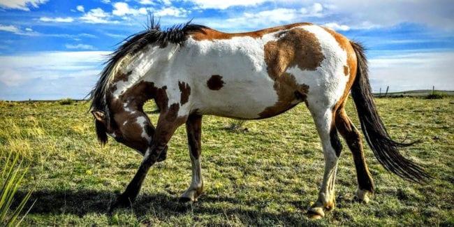 Great Escape Mustang Sanctuary Deer Trail Colorado