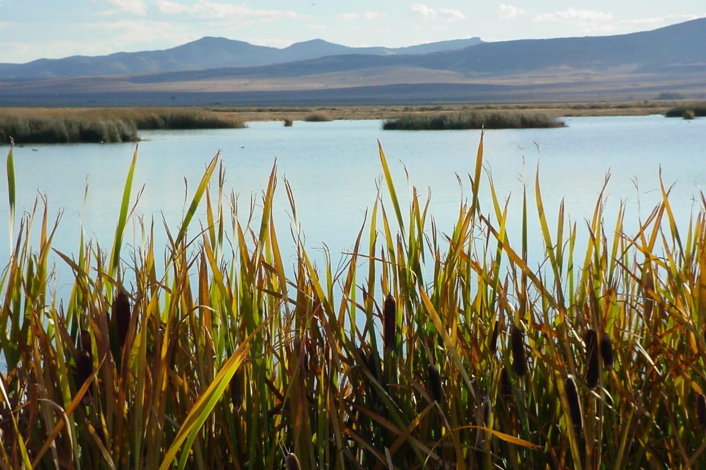 Monte Vista National Wildlife Refuge Wetlands