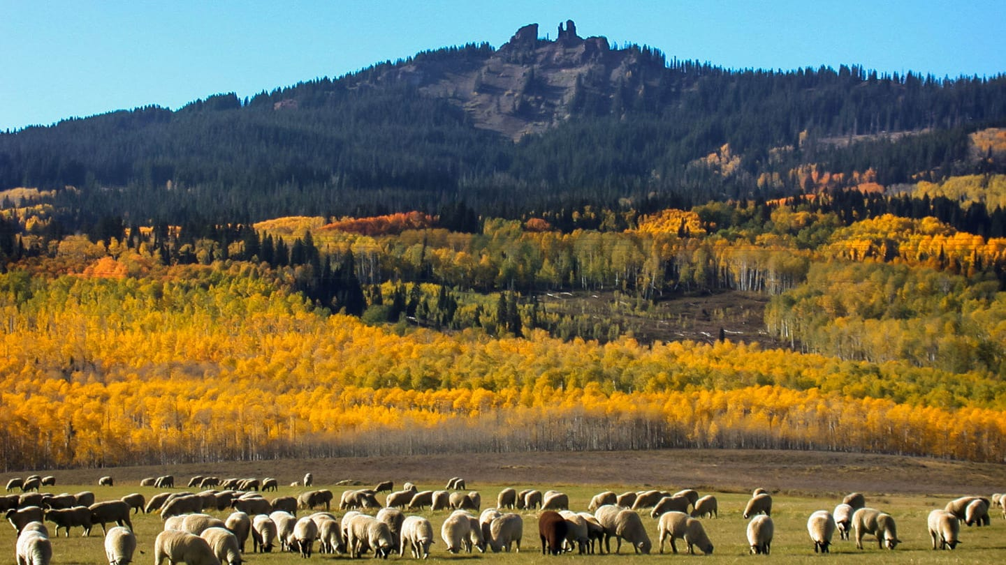 Rabbit Ears Pass Colorado Autumn