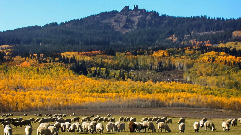 Rabbit Ears Pass Colorado Autumn