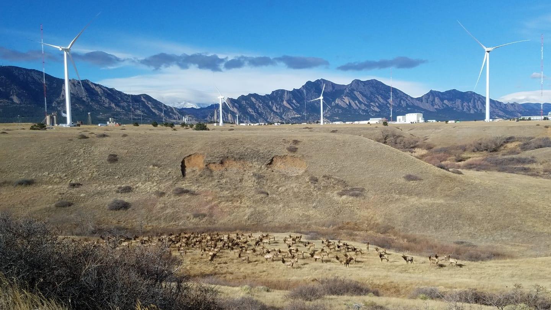 Rocky Flats National Wildlife Refuge Golden Elk Herd Windmills