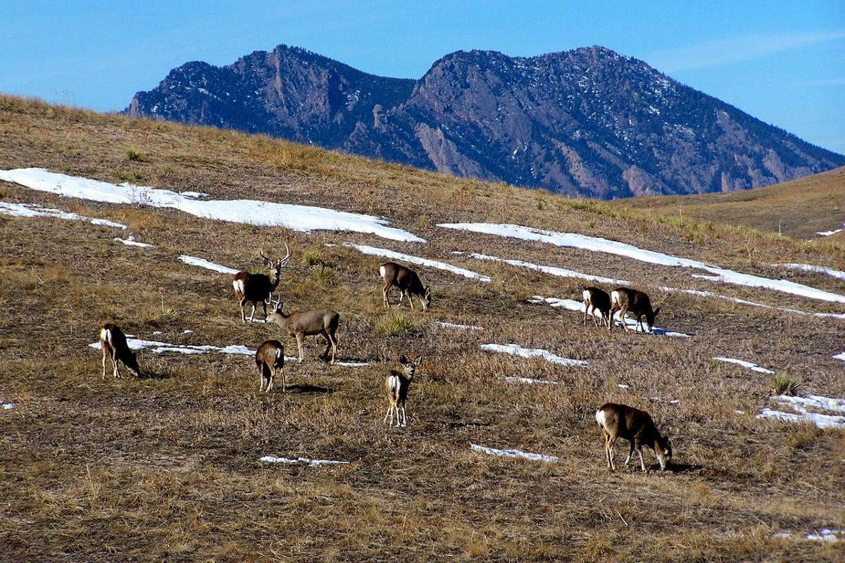 Rocky Flats National Wildlife Refuge Golden Deer Flatirons