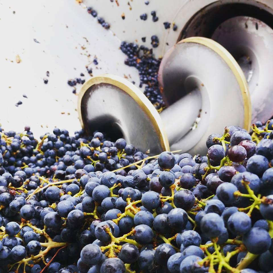 St Kathryn Cellars Grapes Colorado