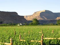 Bookcliff Vineyards Palisade