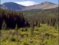 Buffalo Peaks Wilderness Area