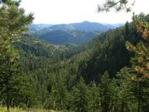 Cache La Poudre Wilderness Area