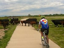 Poudre River Corridor Recreation Trail