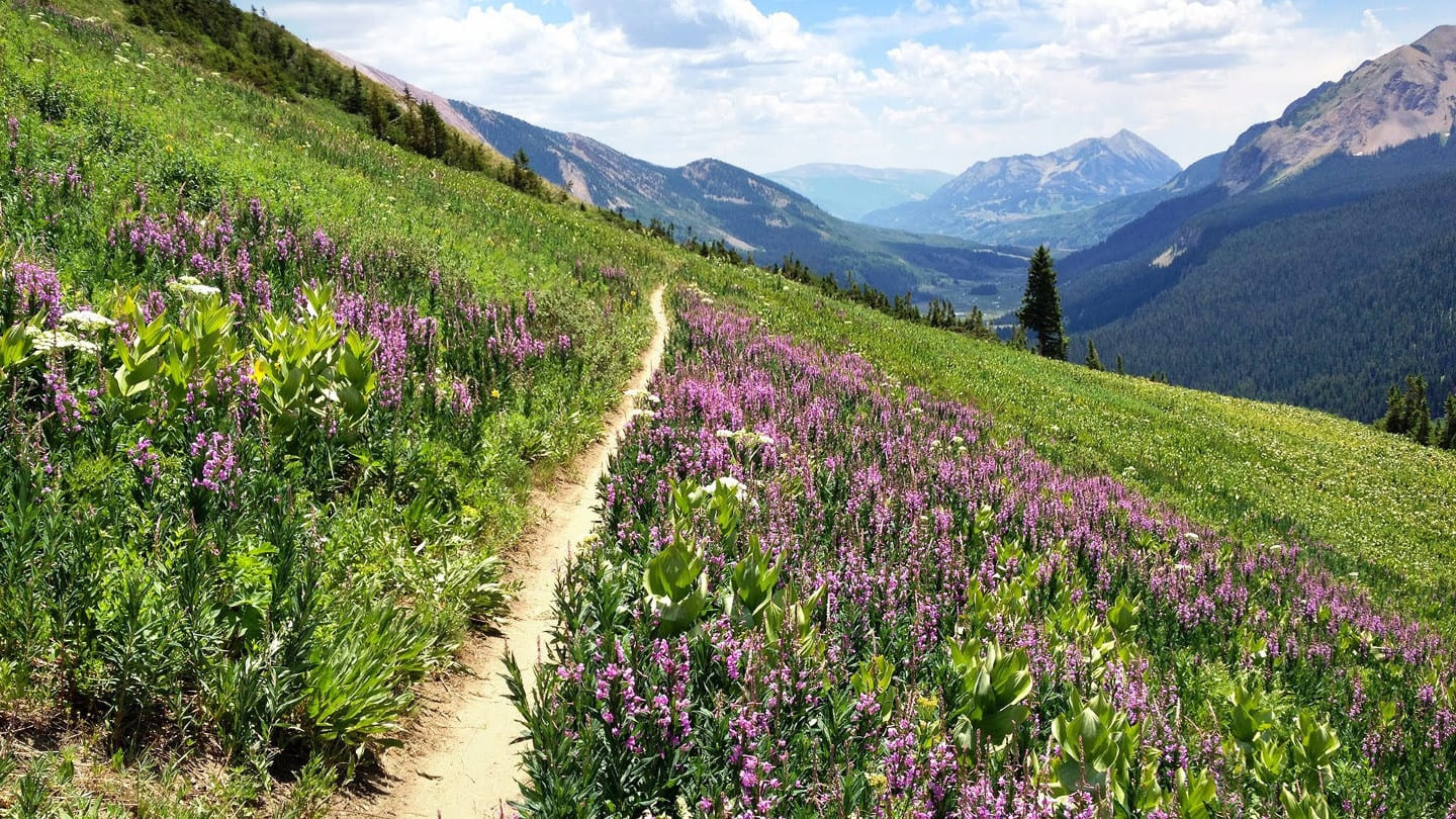 401 Trail Wildflowers Crested Butte Colorado