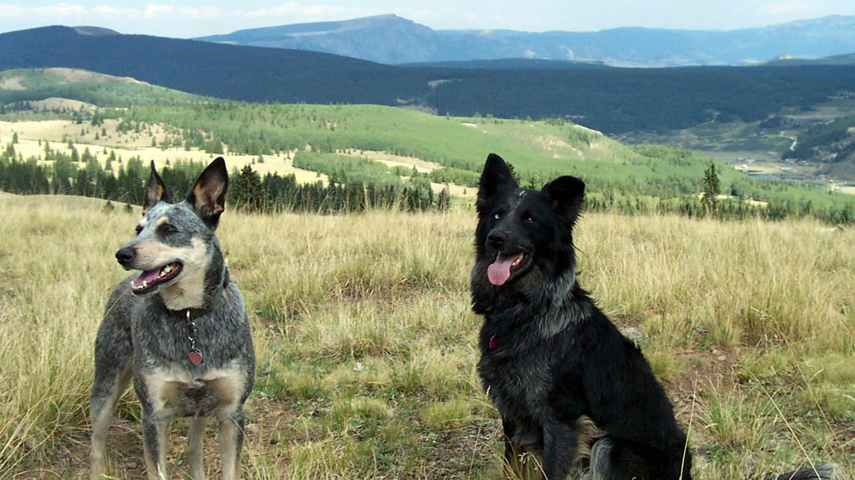 Colorado Dogs Mountain