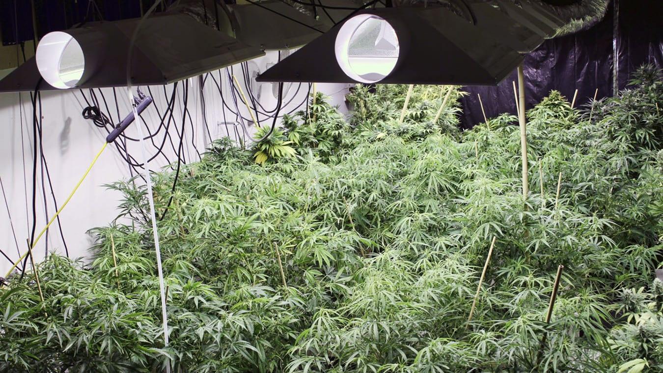 Colorado Commerical Grow House Marijuana