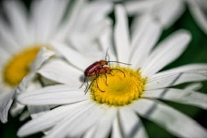 Denver Botanic Gardens Flower Bug Love