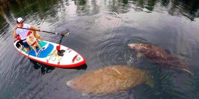 Hala Gear Stand Up Paddle Board Dog