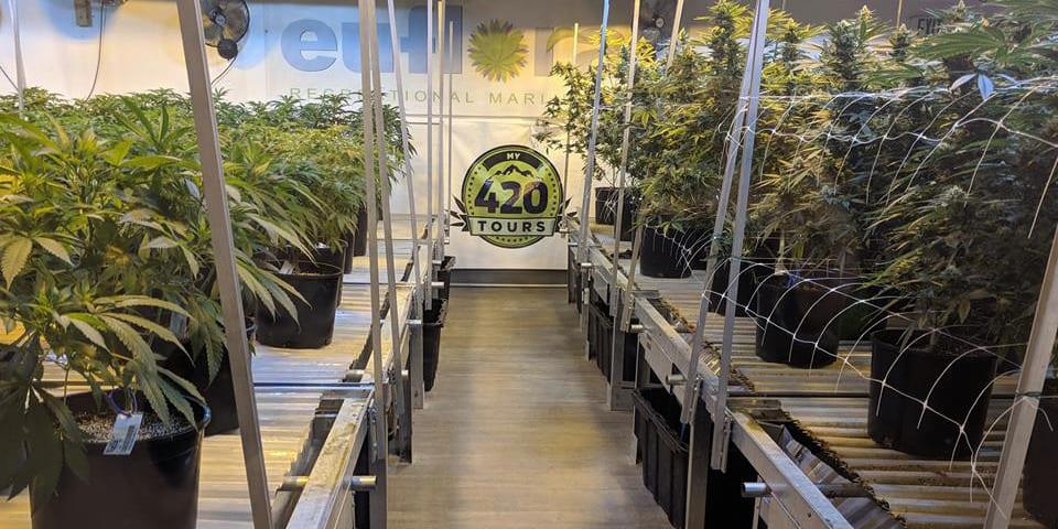 My 420 Tours Denver Colorado