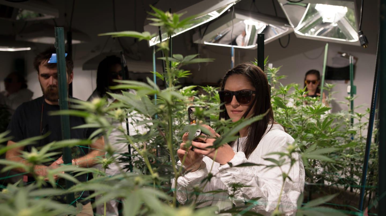 My 420 Tours Cannabis Wellness Tour