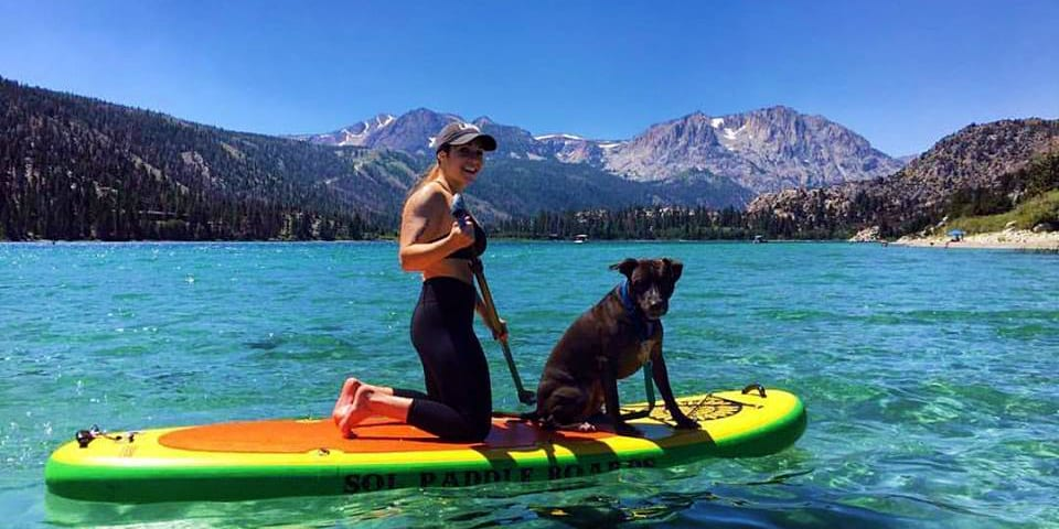 SOL Paddle Boards Dog