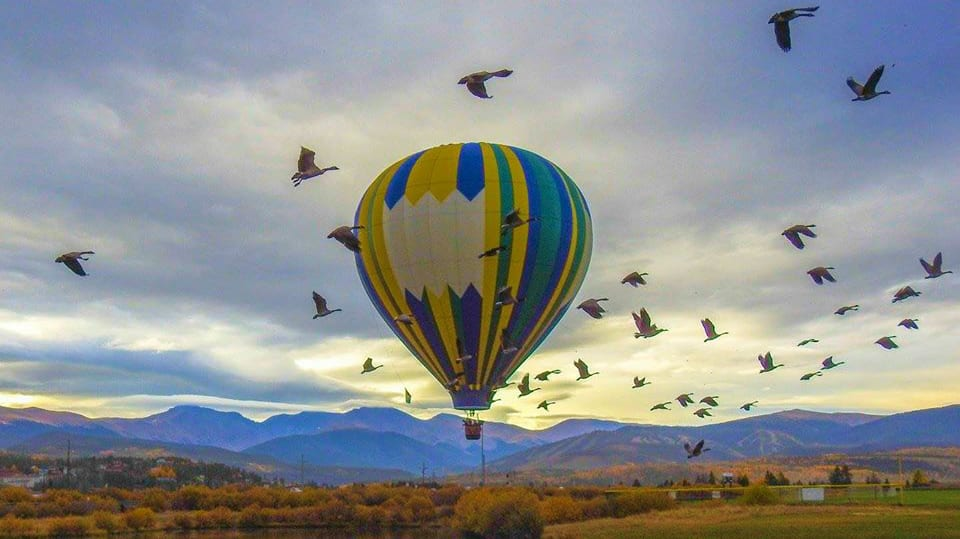 Grand Adventure Balloon Tours Colorado Birds