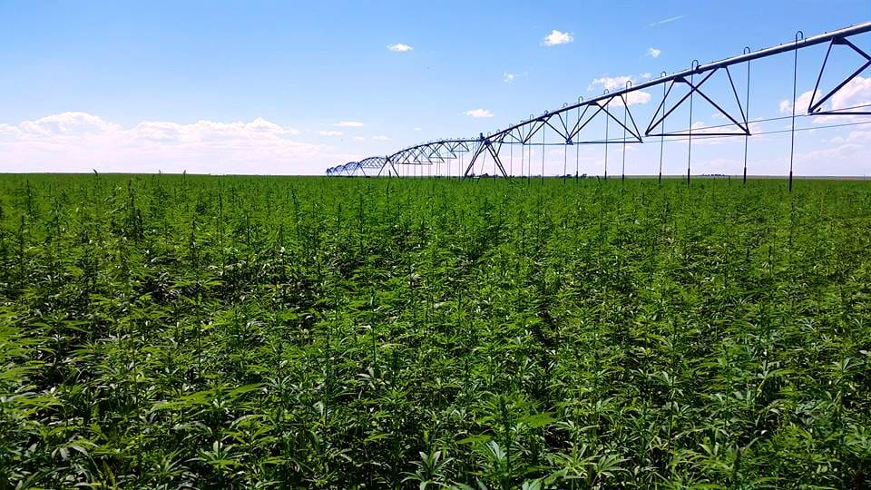 Rocky Mountain Hemp Farm