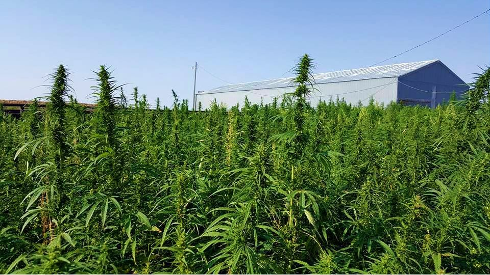 Rocky Mountain Hemp Canabis Farm