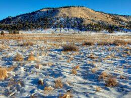 Buffalo Peaks Wilderness Snow Tracks Colorado