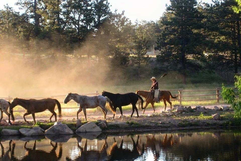 Cherokee Park Ranch Horses Livermore Colorado