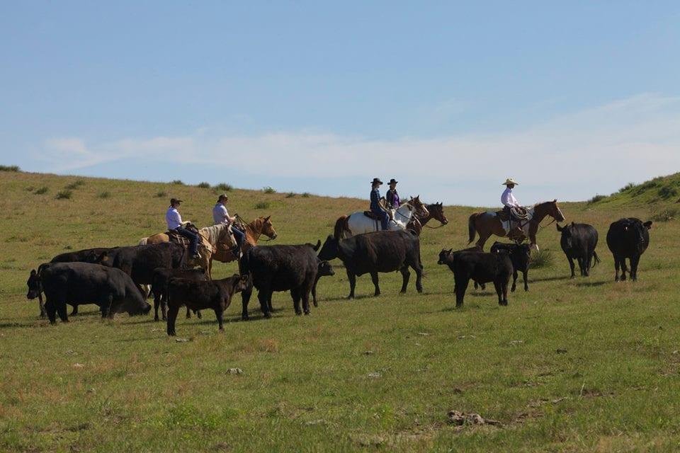 Colorado Cattle Co