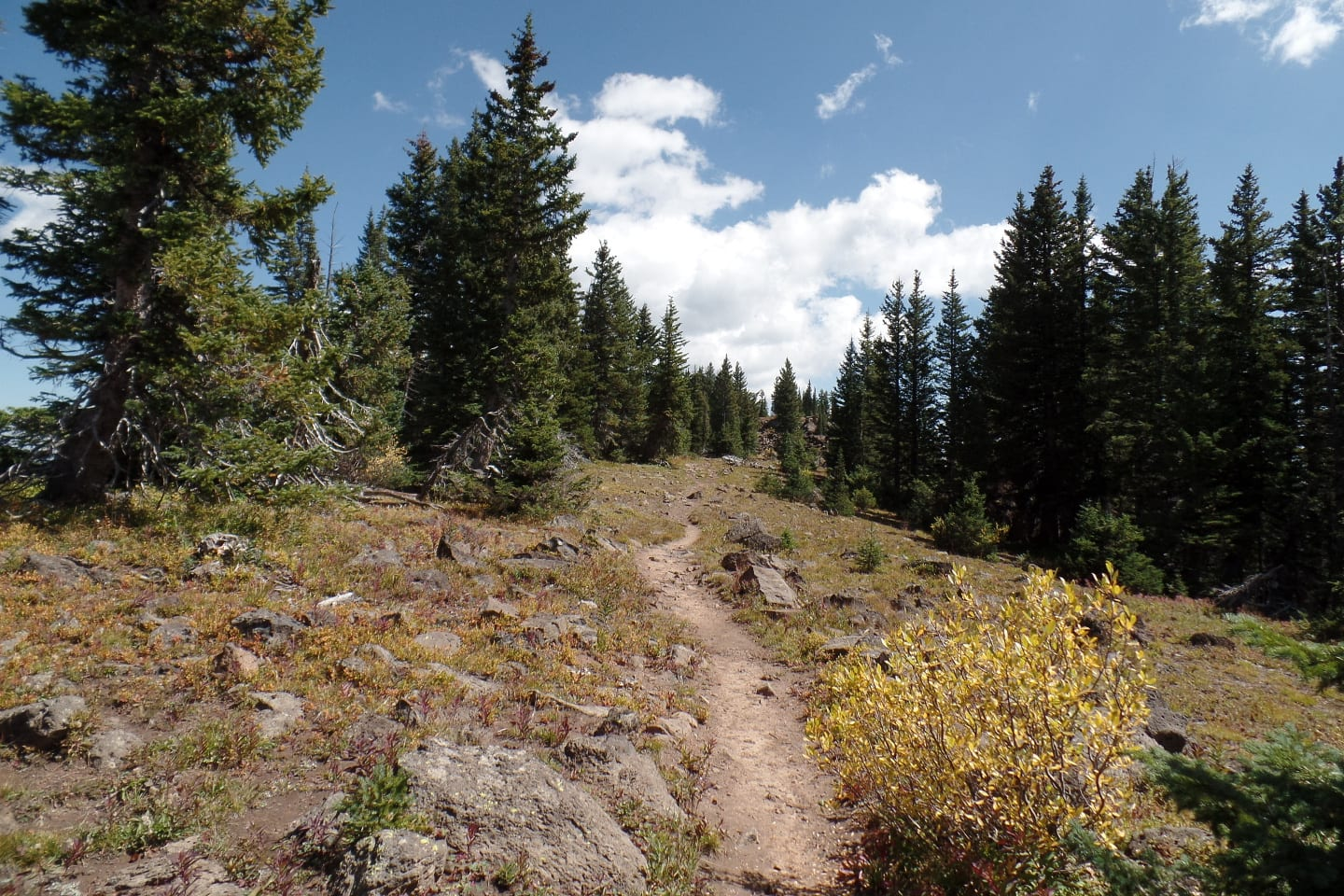 Crag Crest Trail Singletrack Path