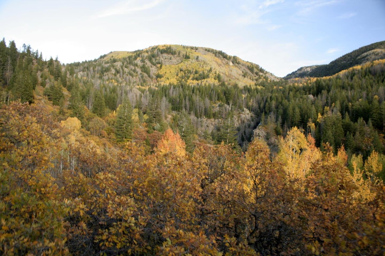Fish Creek Falls Trail Colorful Fall Aspens