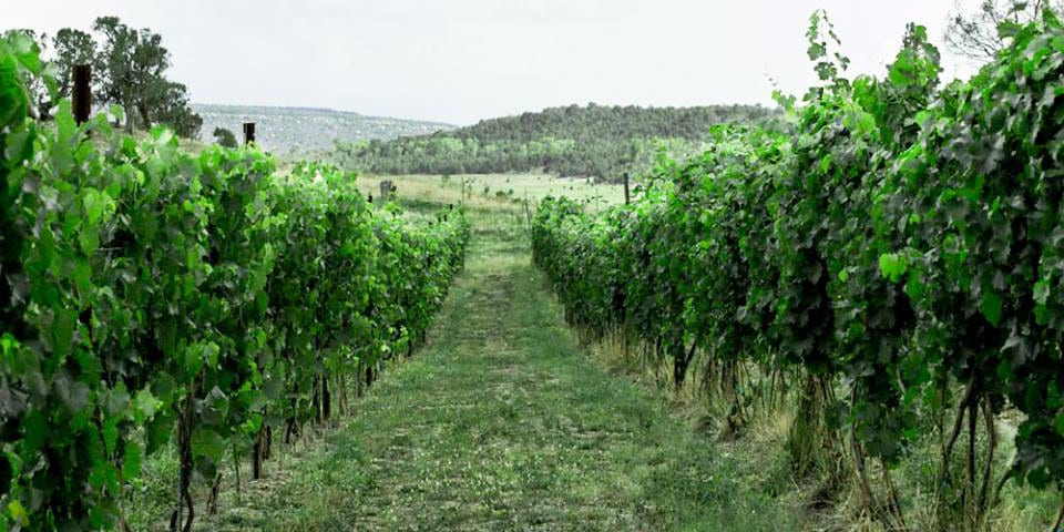Fox Firm Farms Vineyard Ignacio Colorado