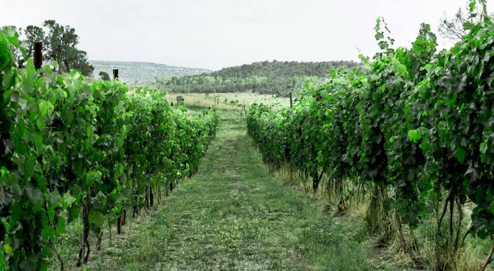 Fox Firm Farms Vineyard Ignacio Colorado