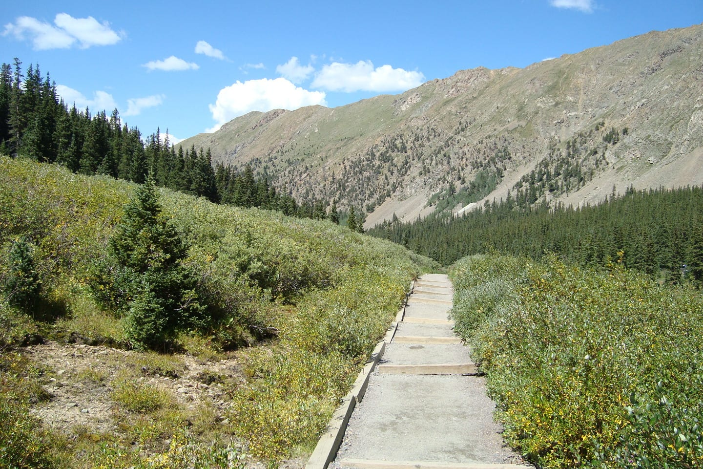 Grays Peak Trail Colorado Tree Line