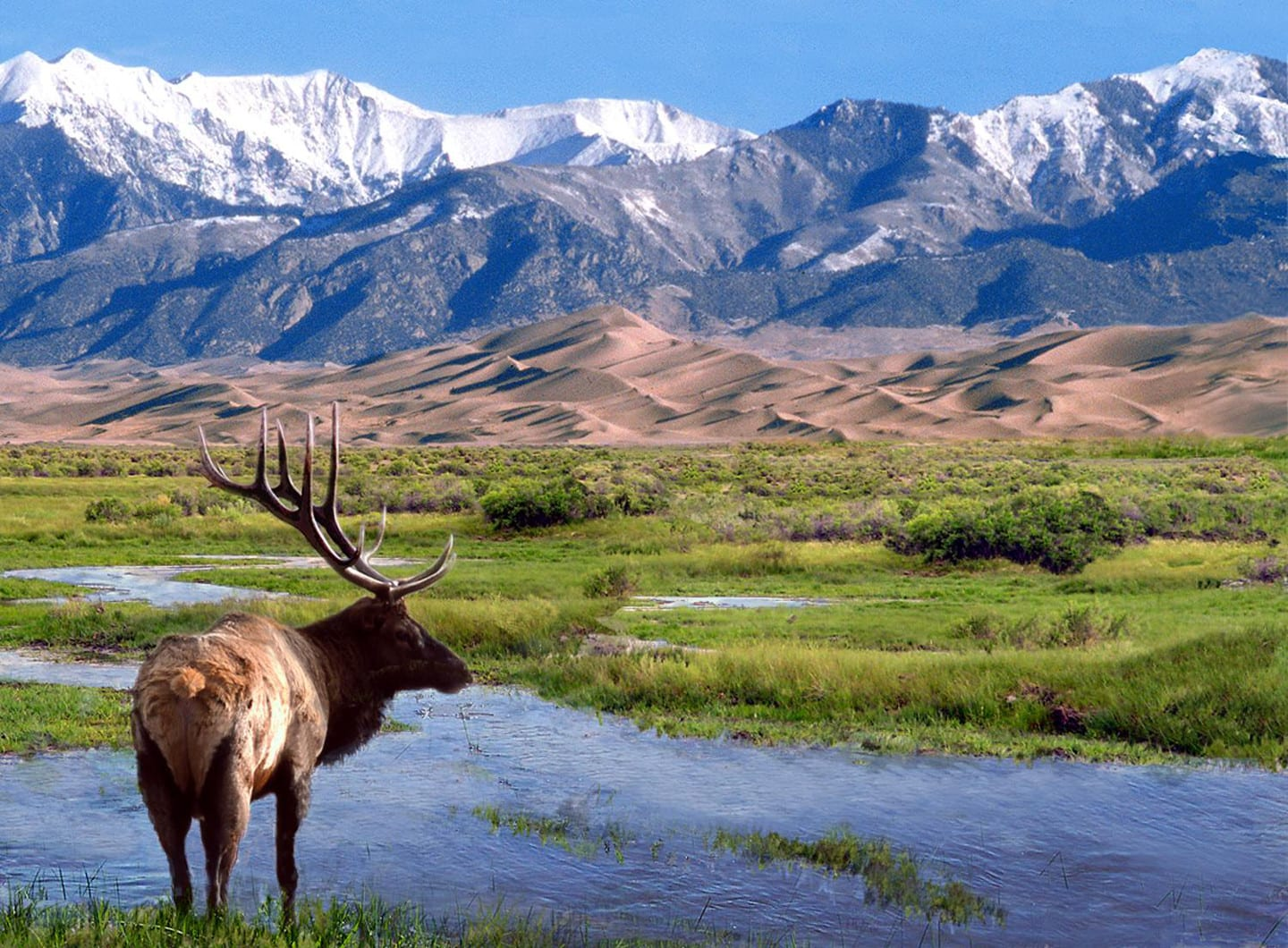 Great Sand Dunes Wilderness Elk
