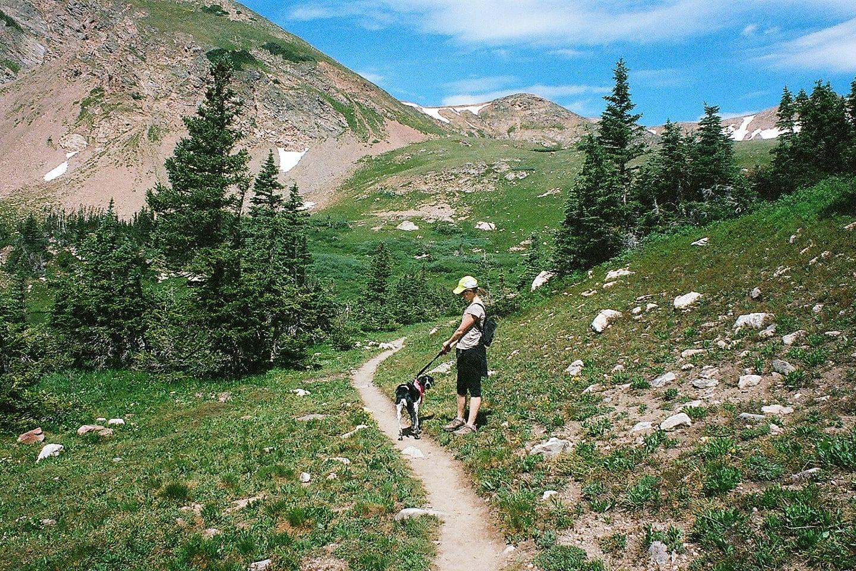 James Peak Wilderness Hiking Dog