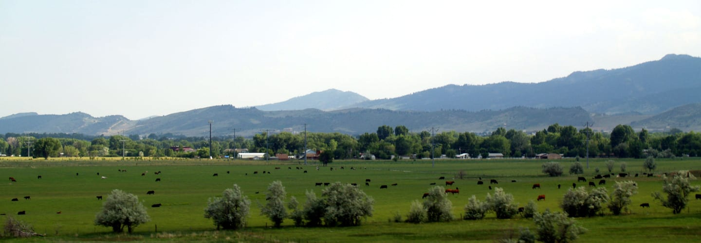 Laporte Colorado Farm Cows