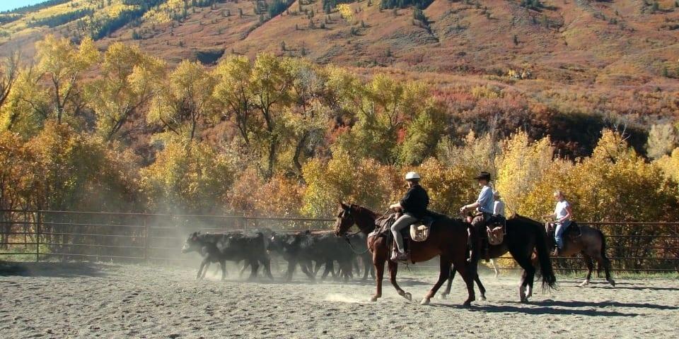 Smith Fork Ranch Horseback Riding Crawford
