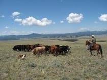 Badger Creek Ranch Canon City