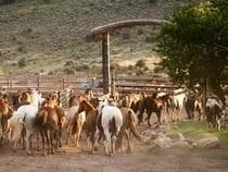 Bar Lazy J Ranch Parshall
