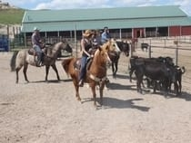 Colorado Cattle Company Guest Ranch Raymer