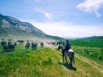 High Lonesome Ranch De Beque